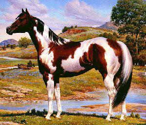 breeds of livestock paint horses horses pictures 300x258