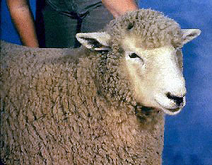 Natural Colored Sheep Breeds
